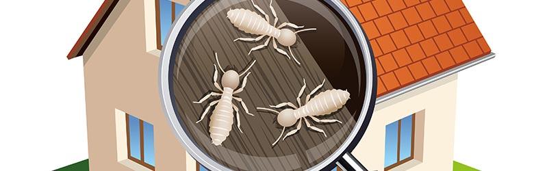traitement des termites Lille