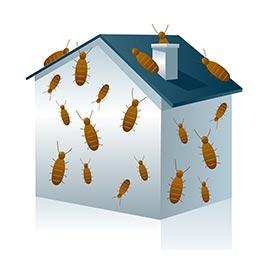 diagnostic termites pas cher en Rhône-Alpes